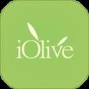 Olio Oliva olive iOlive Startup Agroalimentare Italia Crowdfunding Mashmallow blog Mashcream